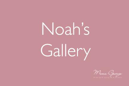 Noah's Gallery